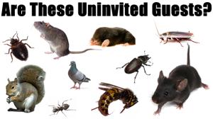 شركة مكافحة الحشرات بمكة وبجدة