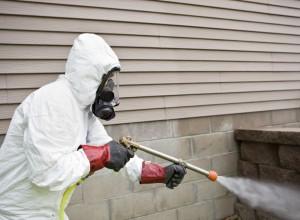 شركات مكافحة النمل الابيض بجدة